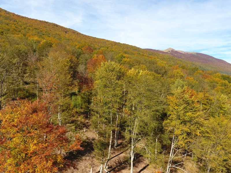 Herbstlandschaft   Foto: Shebenik-Jabllanicë Nationalpark
