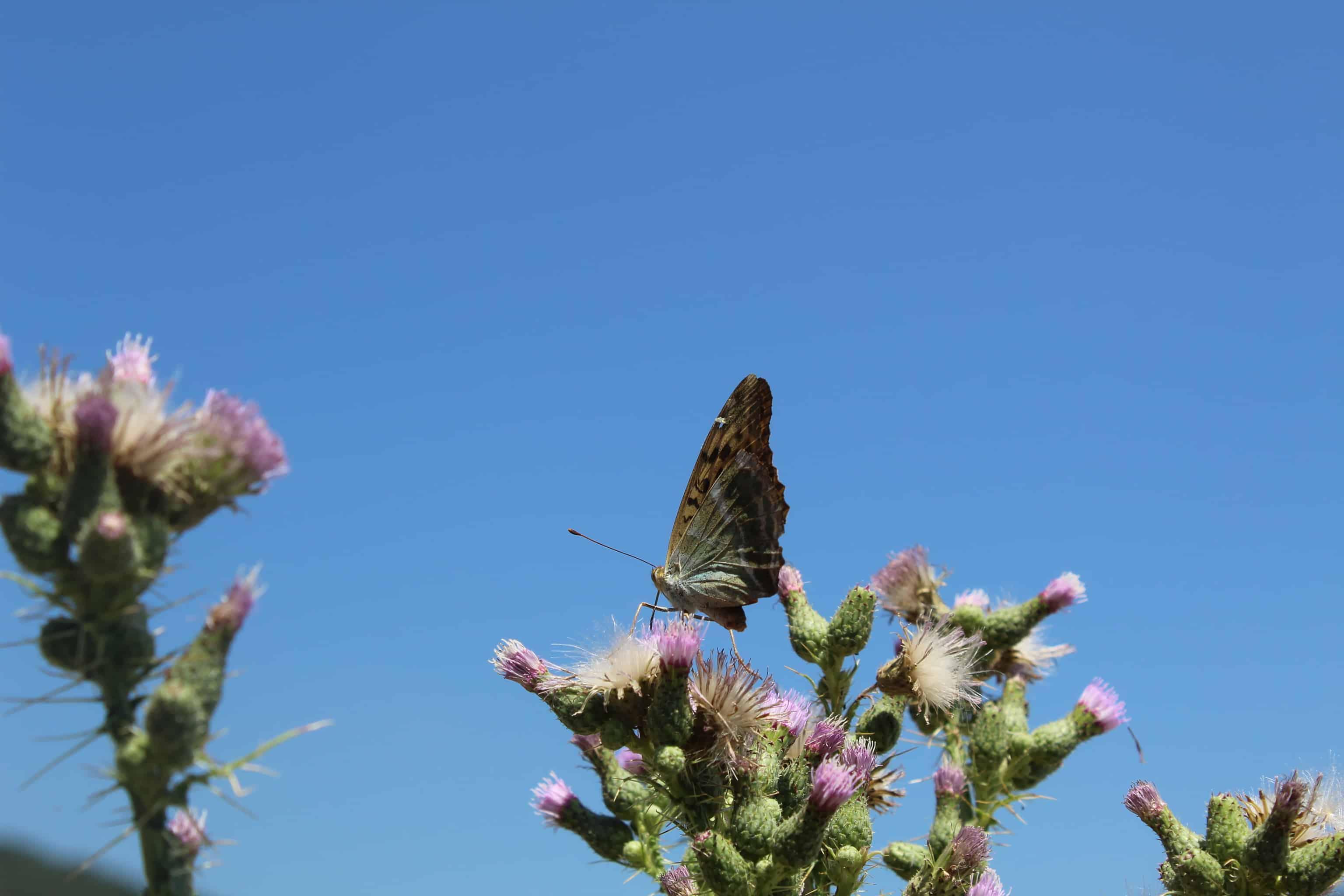 Foto: Nationalpark Prespa