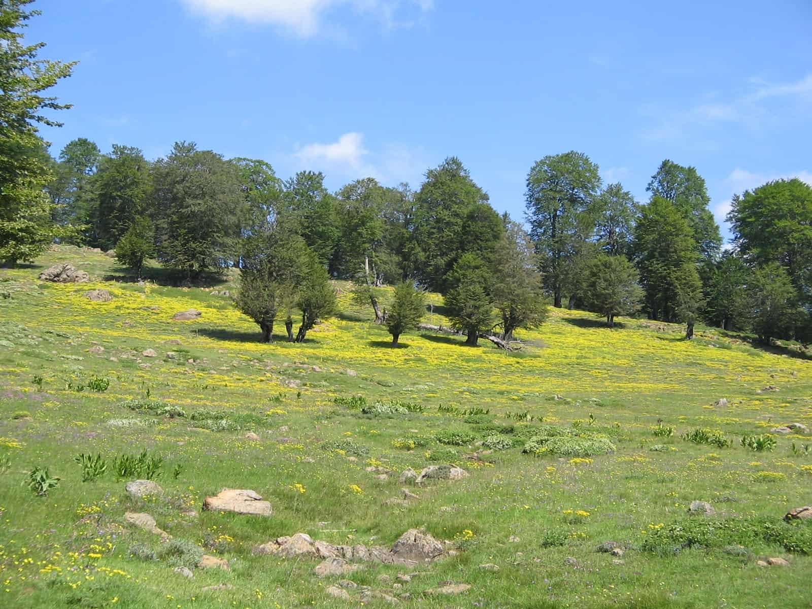 Foto: Shebenik-Jabllanicë Nationalpark